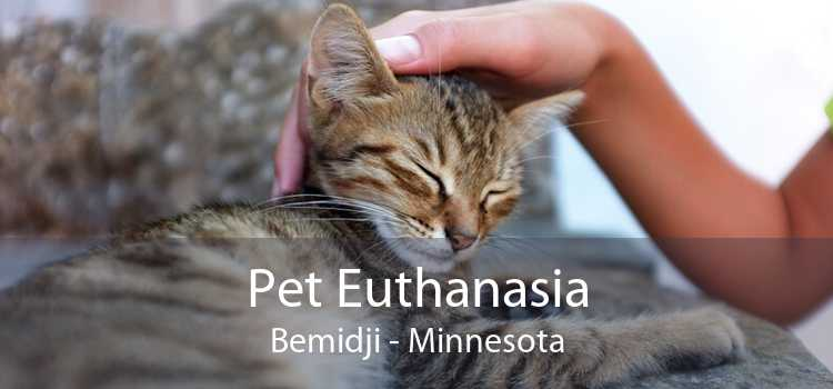Pet Euthanasia Bemidji - Minnesota