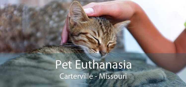 Pet Euthanasia Carterville - Missouri
