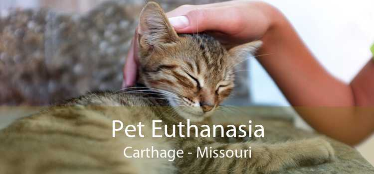 Pet Euthanasia Carthage - Missouri