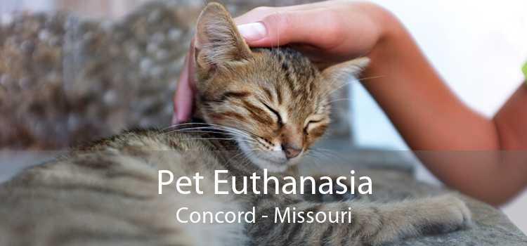 Pet Euthanasia Concord - Missouri