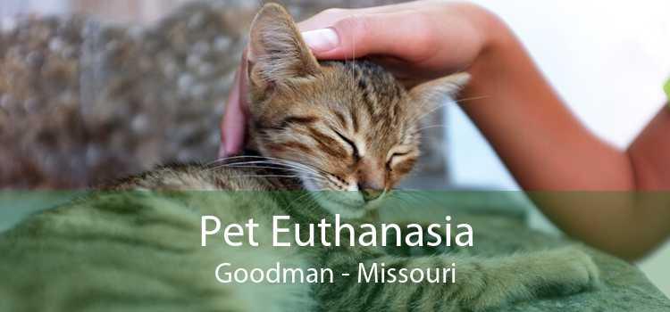 Pet Euthanasia Goodman - Missouri