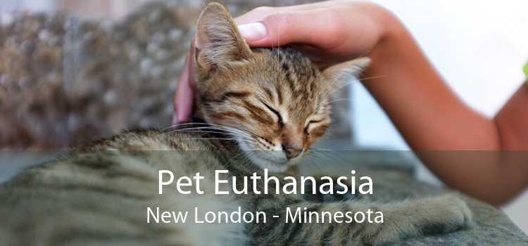 Pet Euthanasia New London - Minnesota