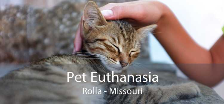 Pet Euthanasia Rolla - Missouri