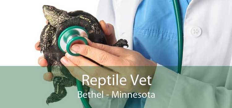 Reptile Vet Bethel - Minnesota