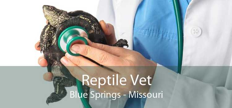 Reptile Vet Blue Springs - Missouri