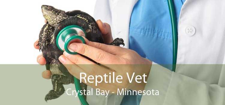 Reptile Vet Crystal Bay - Minnesota