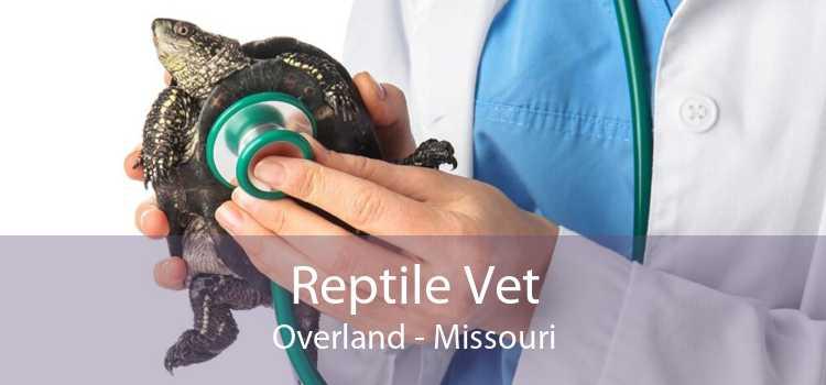 Reptile Vet Overland - Missouri