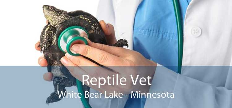 Reptile Vet White Bear Lake - Minnesota