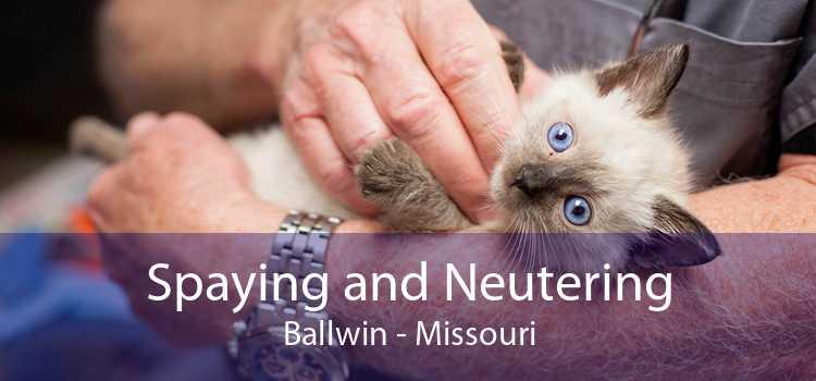 Spaying and Neutering Ballwin - Missouri