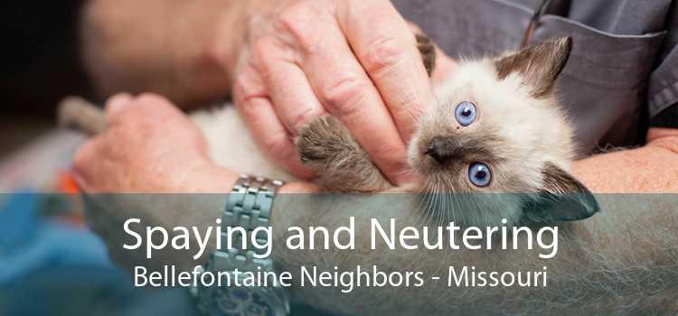 Spaying and Neutering Bellefontaine Neighbors - Missouri