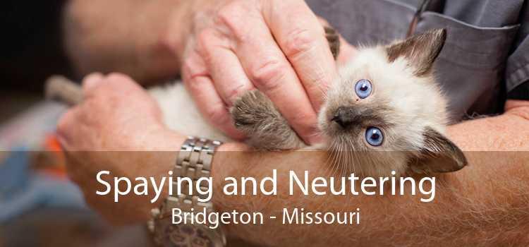 Spaying and Neutering Bridgeton - Missouri
