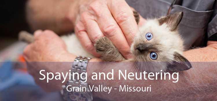 Spaying and Neutering Grain Valley - Missouri