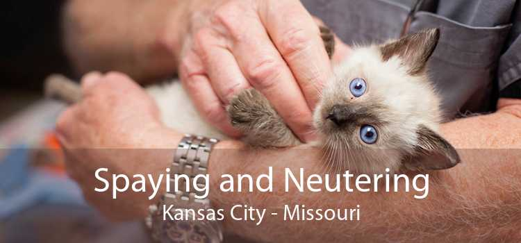 Spaying and Neutering Kansas City - Missouri