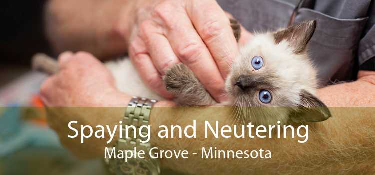 Spaying and Neutering Maple Grove - Minnesota
