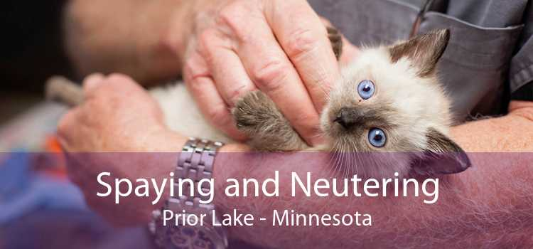 Spaying and Neutering Prior Lake - Minnesota