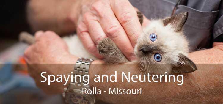 Spaying and Neutering Rolla - Missouri
