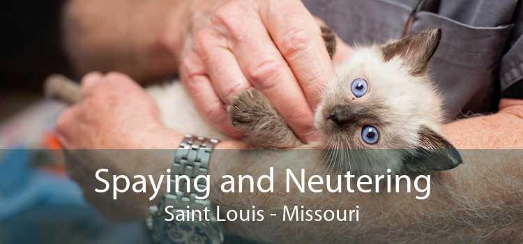 Spaying and Neutering Saint Louis - Missouri
