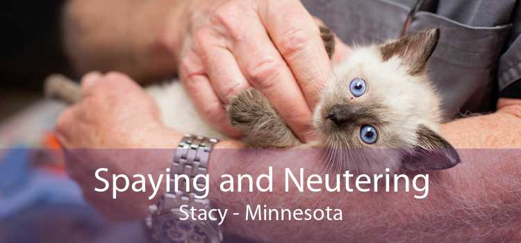 Spaying and Neutering Stacy - Minnesota