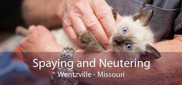 Spaying and Neutering Wentzville - Missouri
