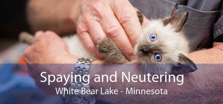 Spaying and Neutering White Bear Lake - Minnesota