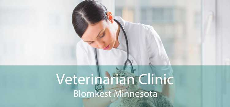Veterinarian Clinic Blomkest Minnesota