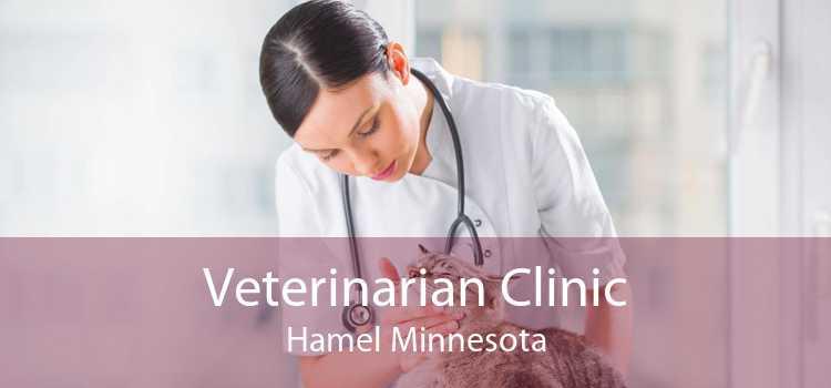 Veterinarian Clinic Hamel Minnesota