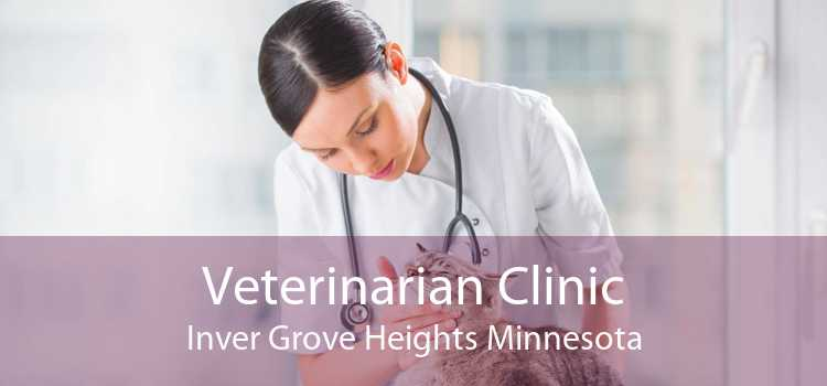 Veterinarian Clinic Inver Grove Heights Minnesota