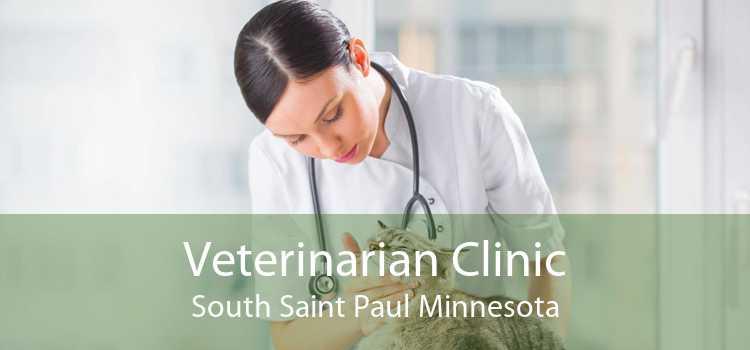 Veterinarian Clinic South Saint Paul Minnesota