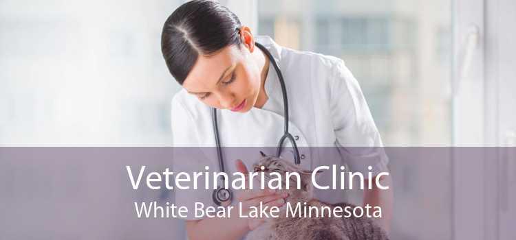 Veterinarian Clinic White Bear Lake Minnesota